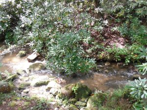 River & Rocks